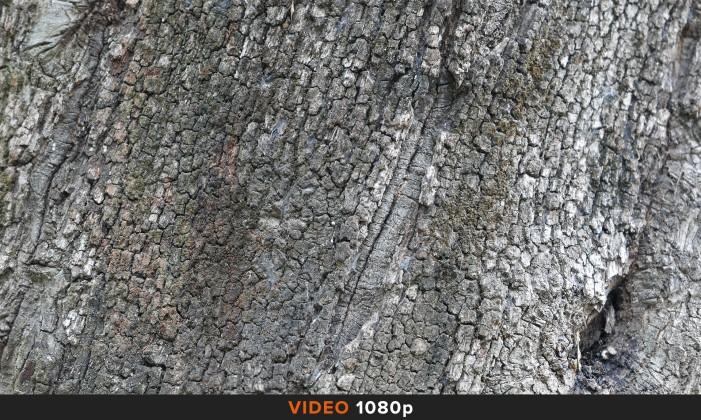 Confronto 1080p Panasonic LX100