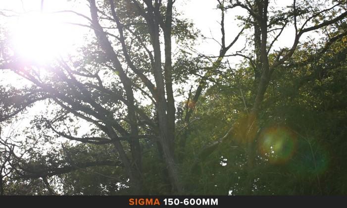 Flares 150-600mm Comparazione obiettivi