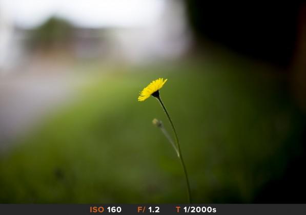 Bokeh3 Canon 50mm f/1.2