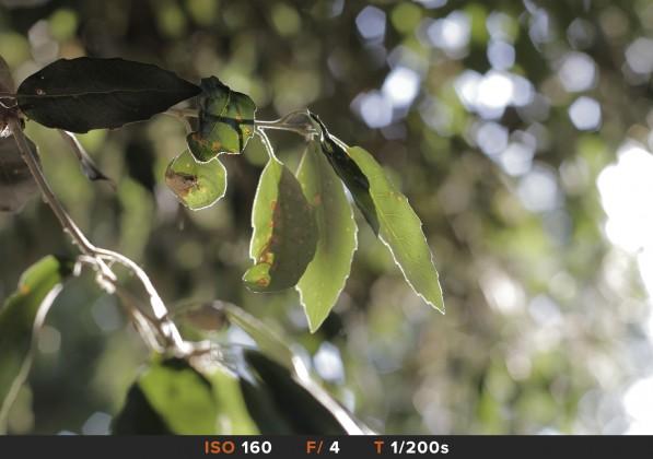 Bokeh3 Canon 50mm f/1.8 STM