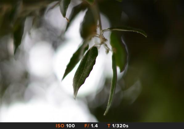 Bokeh4 Nikon 58mm f/1.4