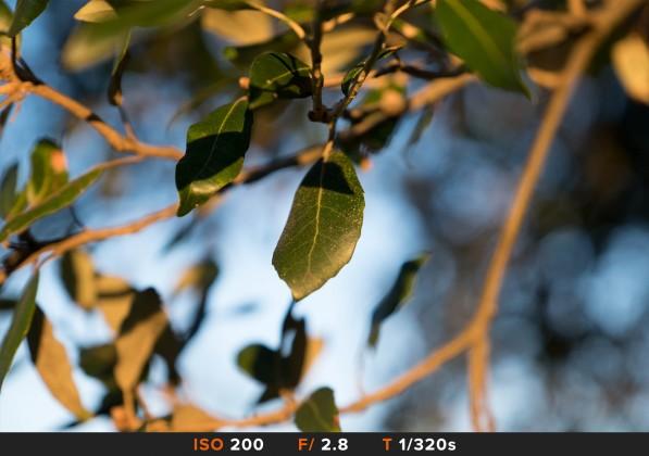 Bokeh4 Fuji 16-55mm f/2.8