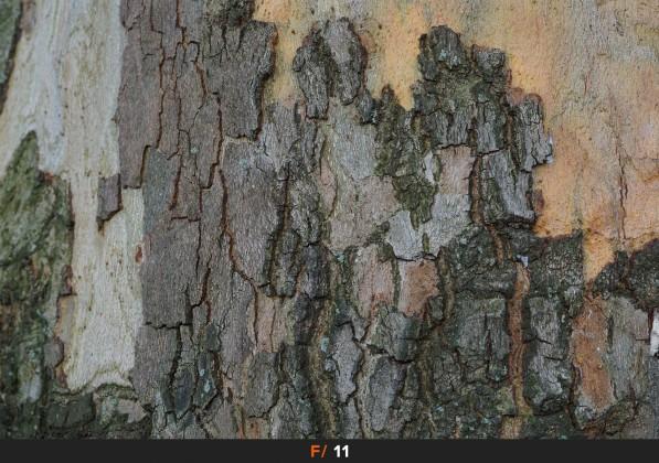 Nitidezza f/11 Sigma 60mm f/2.8 Art