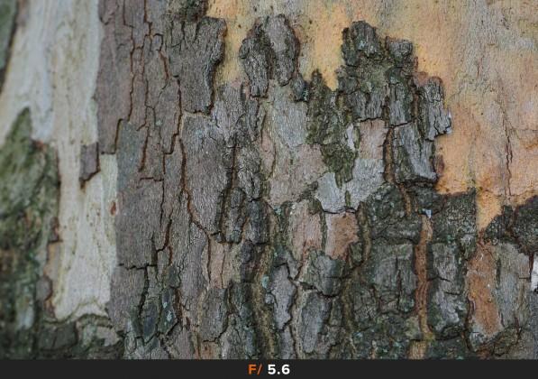 Nitidezza f/5.6 Sigma 60mm f/2.8 Art