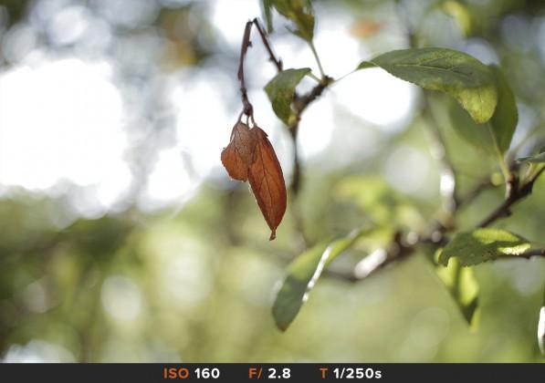 Bokeh1 Sigma 150-600mm Comparazioni obiettivi