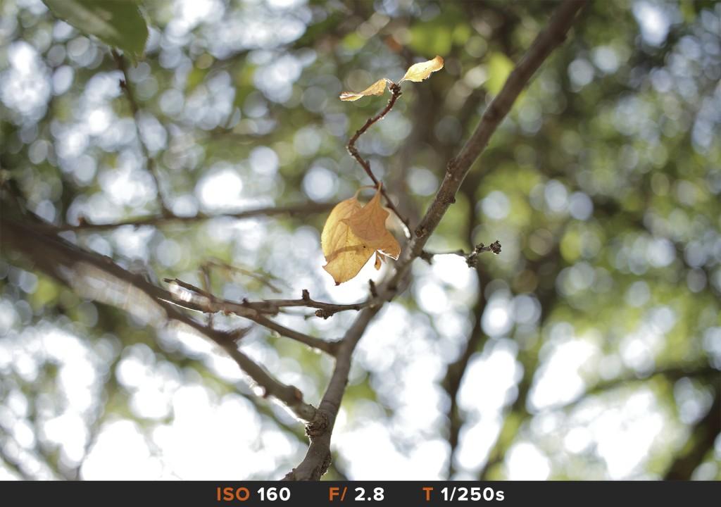 Bokeh3 Canon 70-200mm Comparazioni obiettivi