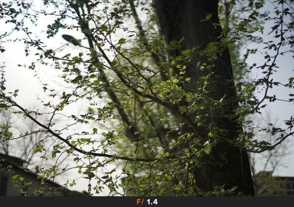 Flares f/1.4 Sigma 50mm f/1.4 Art