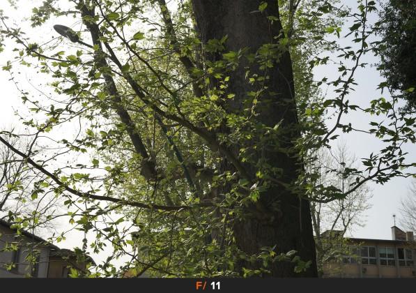 Flares f/11 Sigma 50mm f/1.4 Art