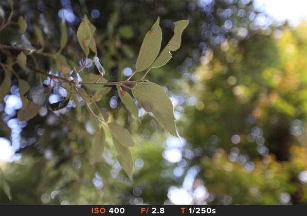 Bokeh 7 Canon 16-35mm f2.8