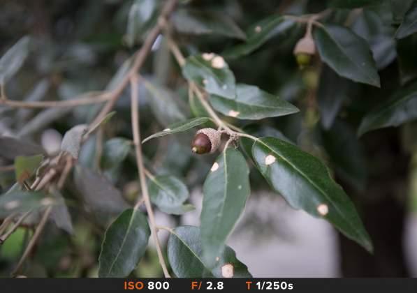 Bokeh 6 Canon 16-35mm III