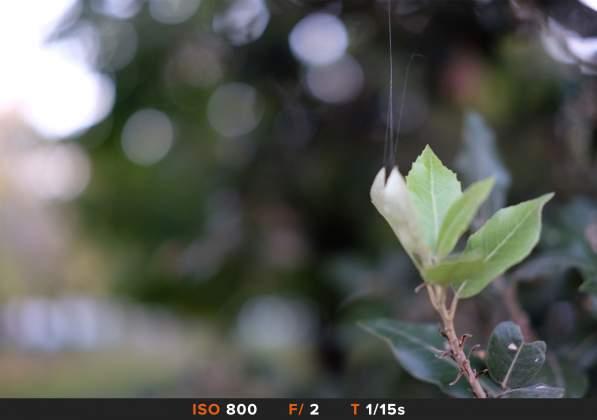 Bokeh 7 FujiFilm 35mm f2