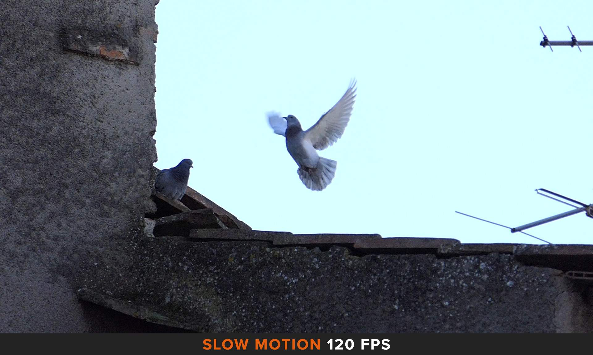 Slow-Motion-Filmato-Panasonic-FZ200