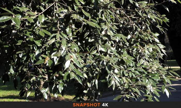 Snapshot 1 Filmato 4K Panasonic-FZ200