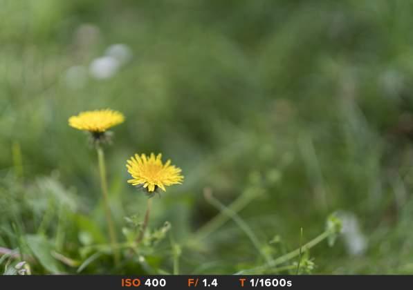 Bokeh 1 Sony FE 50mm f1.4 G Master