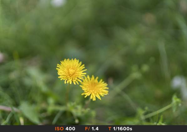 Bokeh 3 Sony FE 50mm f1.4 G Master