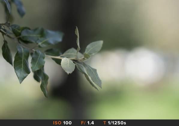 Bokeh 6 Sony 85mm f1.4 GM