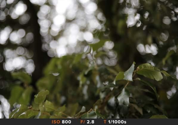 Bokeh 4 Tamron 24-70mm f/2.8