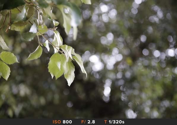 Bokeh 5 Tamron 24-70mm f/2.8