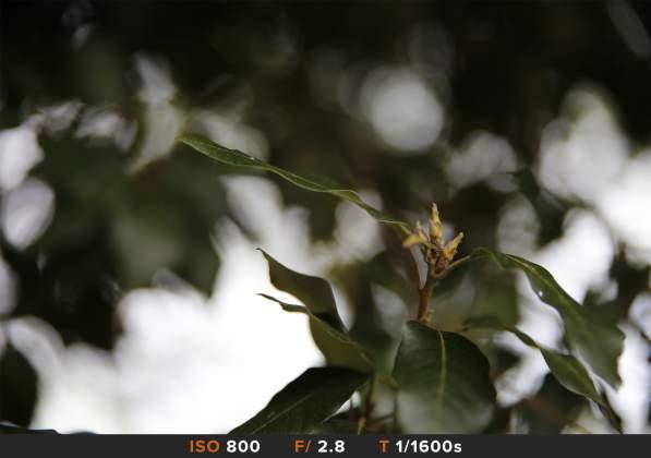 Bokeh 8 Tamron 24-70mm f/2.8