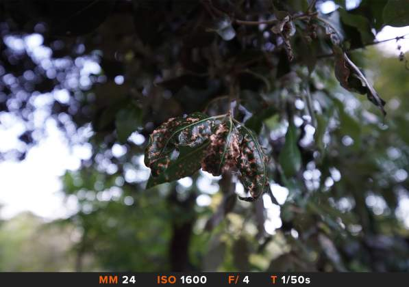 Test Bokeh 9 Sony FE 12-24mm f4 G
